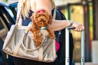 There Are Some Trips That Just Wouldn't Be Right Without Your Best Furry Friend