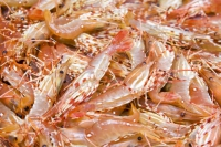 Legend Holdings Signs Strategic Cooperation Agreement with Seafood Company Kailis Family