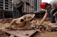 Giant Animal Fossils Found at Building Site in Lanzhou
