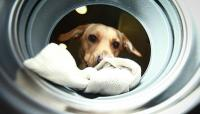 The Dog Voice Control Washing Machine Was Born