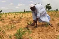 Nigeria: Fao Seeks Urgent Funding to Target 385,000 People with Farming Support in Northeast