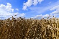 G3 Global Grain Group Gains Majority Stake in Canadian Grain Handler Cwb