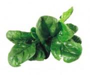 Eating Green Leafy Vegetables Could Help Slow Cognitive Decline