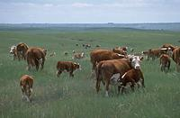 Last July's USDA Cattle Inventory Report Fell to The Budget Ax Due to Sequestration
