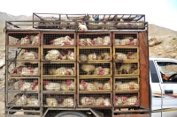 South Korea Bans Imports of US Poultry Due to Bird Flu