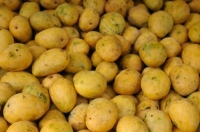EU to Lift The Ban on Indian Mango Imports,Paving The Way to Resume Trade in The UK