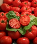 A New Investigation to The Alleged Dumping of Prepared or Preserved Tomatoes