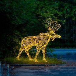 A Conduit à Travers le Motif de la Rue S'allumer L'éclairage pour la Fête de Diwali Éclairage de Rue