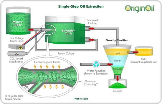 microalgae wastewater treatment thesis
