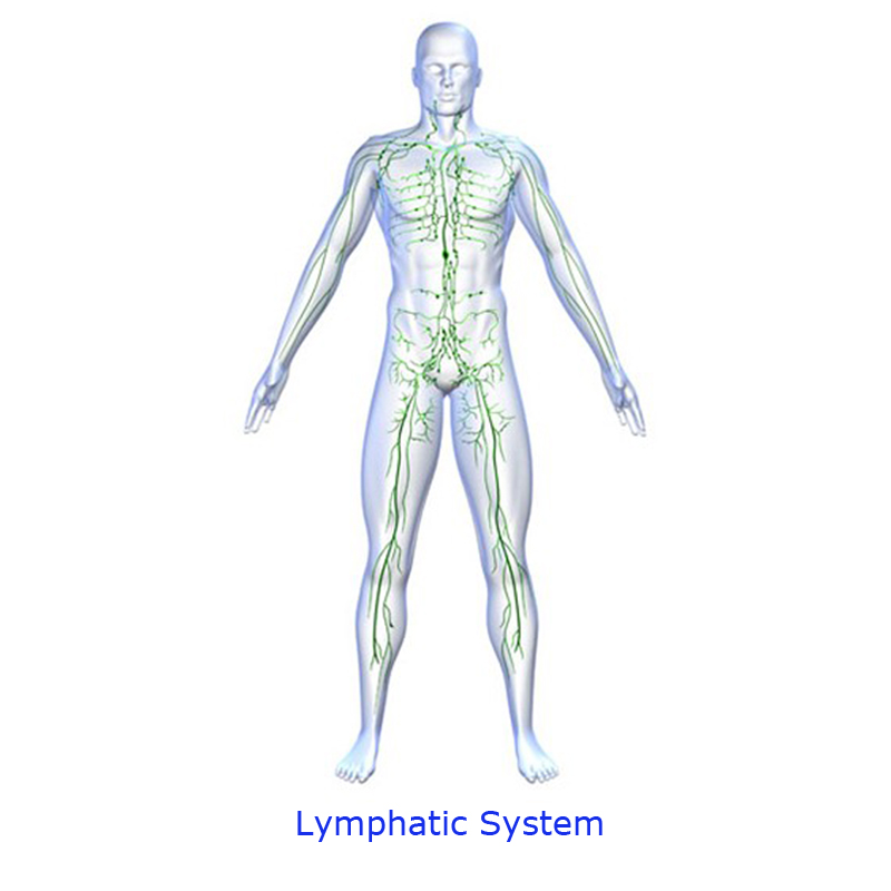 Quick Easy Tips Lymphatic System Diagram
