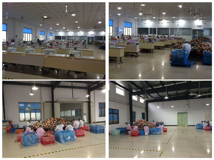Yangzhou Round Toy Co., Ltd.