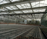 Greenhouse inside show