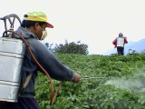 Pesticide (Agrochemical Application)