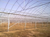 Multi-span Tunnel Greenhouse Structure