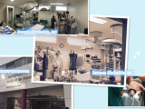 Poweam Veterinary Solution