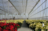 Flower Planting Greenhouse