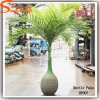 Fiberglass Artificial Bottle Palm Trees for Indoor or Outdoor Decoration