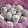 Garlic - Jining Golden Longyuan International Trading Co., Ltd.