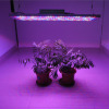 LED Grow Light - Foshan Zhongzhi Photoelectricity Technology Co., Ltd.