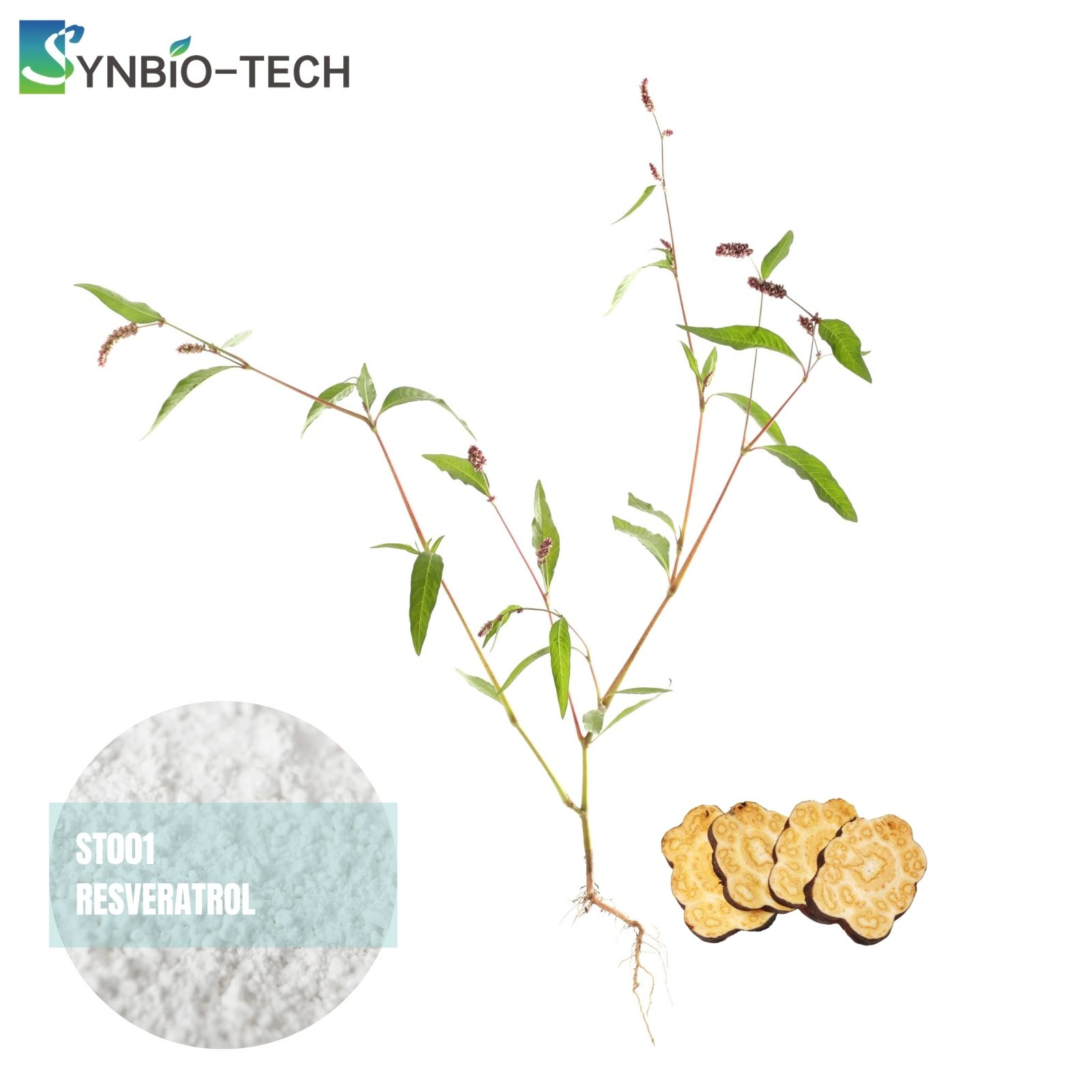 Syn-Bio Technology (Suzhou) Co., Ltd.