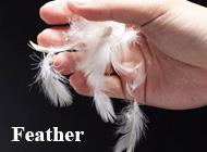 Dezhou Shangyu Feather Products Co., Ltd.