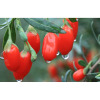 Goji Berry - Ningxia Zhengyuan Wuzhong Muslim Food Co., Ltd.