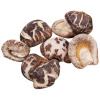 Mushroom - Guangdong Yuewei Edible Fungi Technology Co., Ltd.