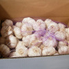 Garlic - Qingdao Dragon-Sea Enterprise Co., Ltd.