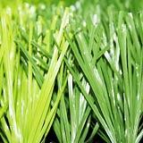 人工的な草