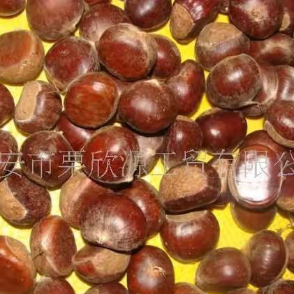 Chestnut - Taian City Lixinyuan Industry and Trade Co., Ltd.