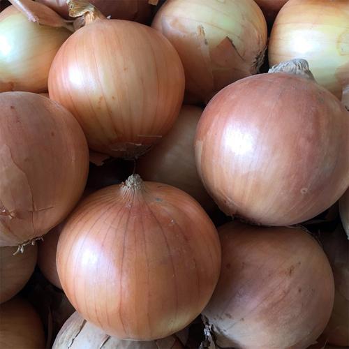 Onion - Jinanshihuaiyinqu Yirun Special Field Cooperative